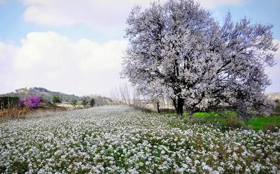 foto-flores-y-ermita